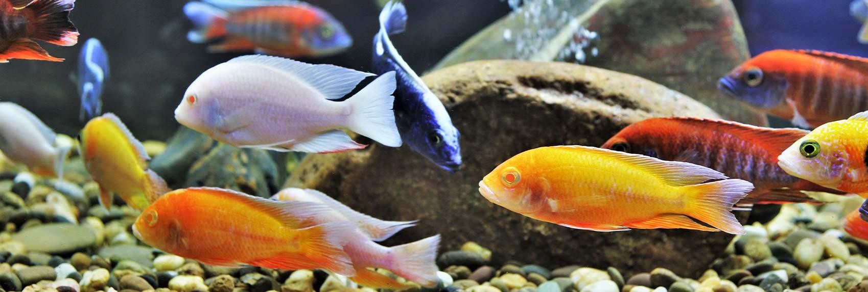 Category: <span>Fish</span>